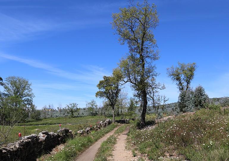 Quinta do Pinho